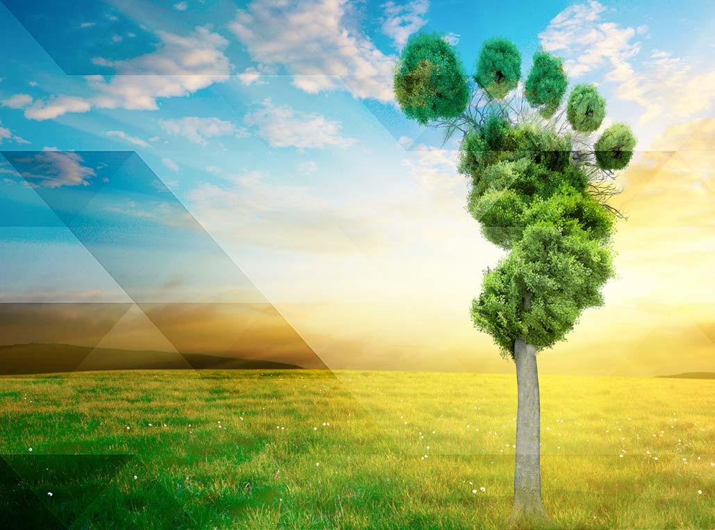gebrdekoning mvo planet co2 carbonfootprint